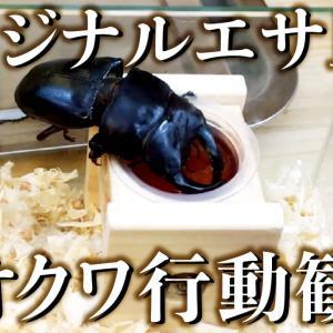 オリジナルエサ皿でオオクワガタのレイアウト飼育(YouTube)