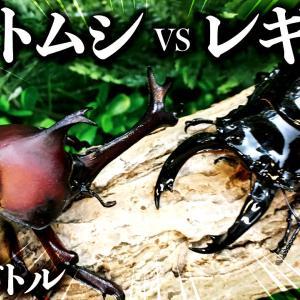 【昆虫バトル】カブトムシvsレギウスオオツヤクワガタ