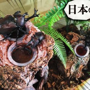 【初心者向け】採集した地元のカブトムシとクワガタで日本のテラリウムの作り方を解説!