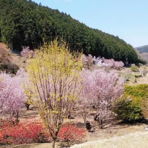 小川町の桃源郷~三波渓谷~北浅羽桜堤公園ポタ
