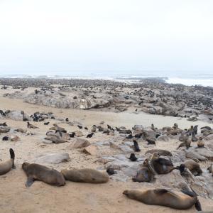 ナミビアレンタカー旅  6日目 20万匹のアザラシがいるCape Crossと座礁船と皮から手作り餃子