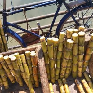 マダガスカル軟禁生活日記 その154 鯖と鯵の味噌焼きとあら汁とジャーマンポテト