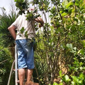 マダガスカル軟禁生活日記 その327 お庭でりんご狩りとクスクスとラムのソーセージ
