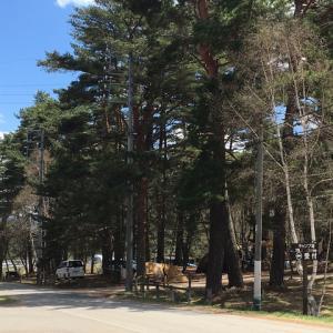 GW  松原湖高原オートキャンプ場
