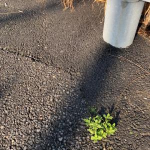 オサンポ walk - スキマ草Plant : この中途半端なトコで the place where we live in is