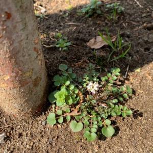 オサンポ walk - 植物plant: 去年ごろから since last year