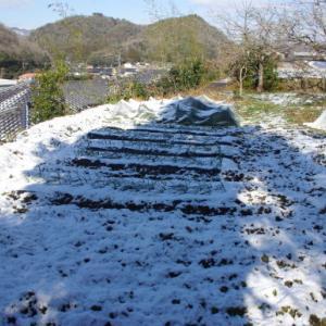 No 167  雪の畑(2019年1月27日)