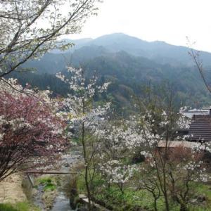 No 174  三ヶ上登山(1062m)