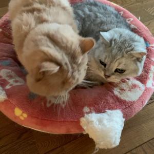 猫団子と、明日は…。