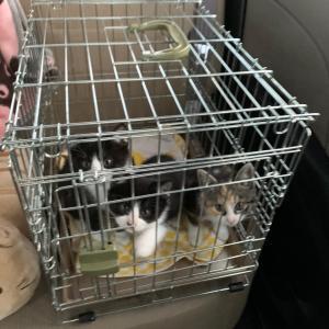 ヒナコ&子猫たちの受診。