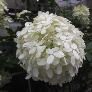 新型コロナウイルス感染症対策 7/3 (土) ペア割