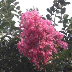 新型コロナウイルス感染症対策 7/17 (土) ペア割