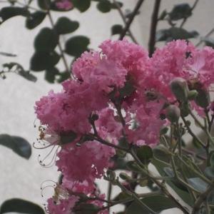 マグネシウムと生活習慣病 8/5 (月) タイムサービス