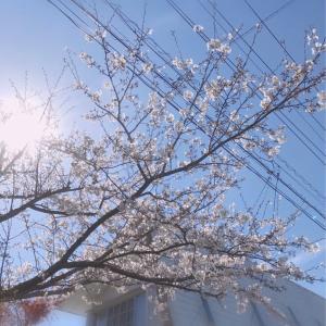 ミロマリ達のお花見♪