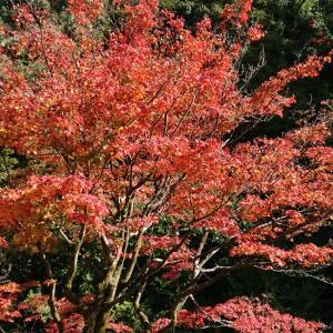秋の知恩院とハイアットリージェンシー京都のランチ。