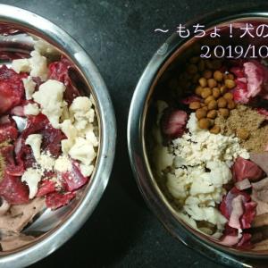 10/15 今日の犬ごはん
