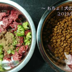 10/19 今日の犬ごはん