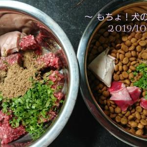 10/20 今日の犬ごはん