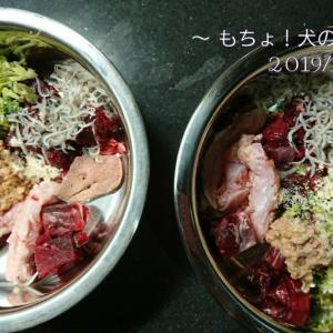 11/6 今日の犬ごはん