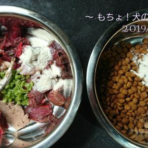 11/18 今日の犬ごはん