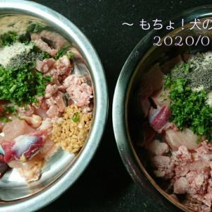 4/1 今日の犬ごはん