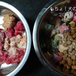 11/15 今日の犬ごはん
