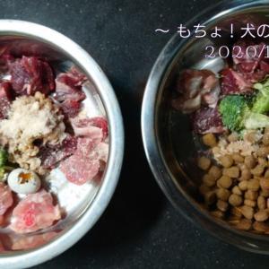 11/28 今日の犬ごはん