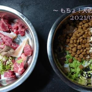 6/15 今日の犬ごはん