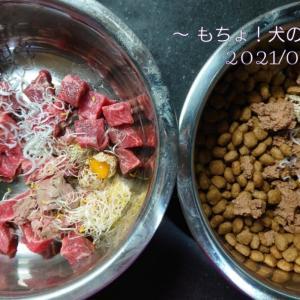 7/29 今日の犬ごはん