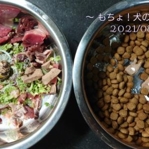 8/28 今日の犬ごはん