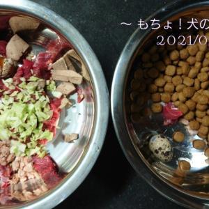 9/1 今日の犬ごはん