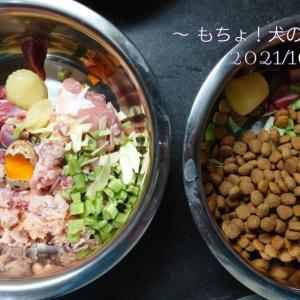 10/24 今日の犬ごはん