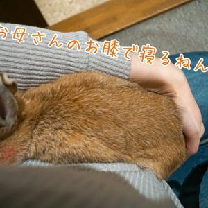 平成→令和やんちゃーず