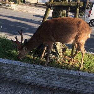ありとあらゆるところに鹿