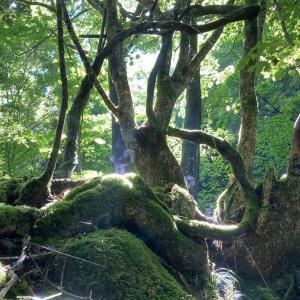 山中院長の休日 奈良の絶景 ~まさに樹のひかりな景色~