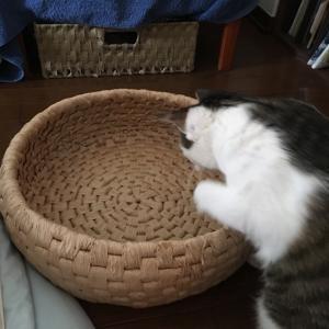 速報2 猫様ちぐら気に入る!?