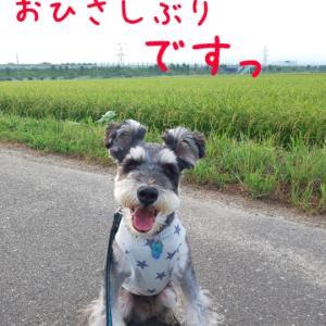 シェルムくんの夏休み・前編