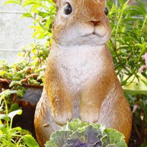 お迎えした花苗を寄せ植えに~トイレの小窓にステンドグラス