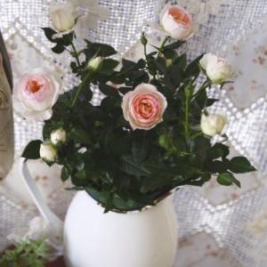 お迎えしたお安いお花たち~セダムの絨毯