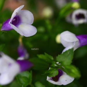 睡蓮や紫陽花の季節~
