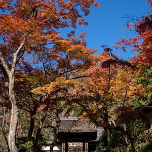 秋、見つけた。【円覚寺】毎年恒例の居士林前の定点観測