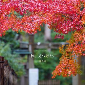 秋、見つけた。【鎌倉宮】雨が魅せてくれた赤