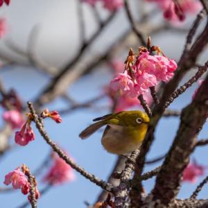 大寒の候【瑞泉寺】鎌倉の奥座敷で水仙を愛でる
