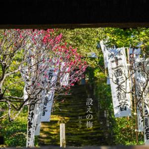 設えの梅【杉本寺】山門の先にみた光景