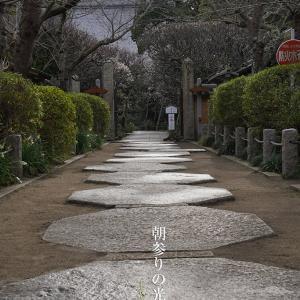 朝参りの光【宝戒寺】雨上がり、湿度多め、人少な目