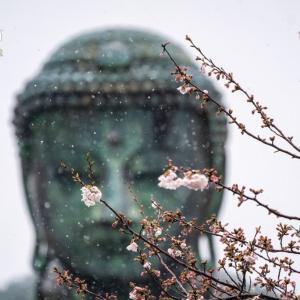 桜・自粛【高徳院】これ以降は写真に残さないと決めた2020年