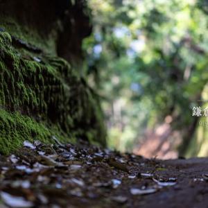 鎌倉点景【朝夷奈切通】GW(我慢ウィーク)の越境は自粛