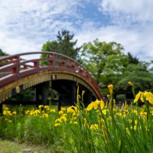 夏立つ【称名寺】ここも鎌倉。黄菖蒲を訪ねて!