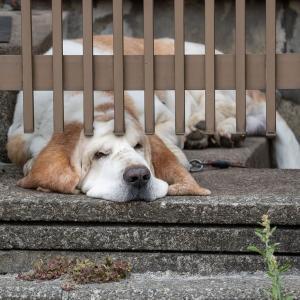 向かいのお宅の愛犬リムの定位置