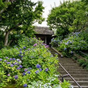夏至末候【東慶寺】本堂から見た景色